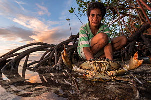 Fijian expert crab hunter with aggressive Mudcrab (Scylla serrata) in mangroves, Mali Island, Macuata Province, Fiji, South Pacific. - Jurgen Freund