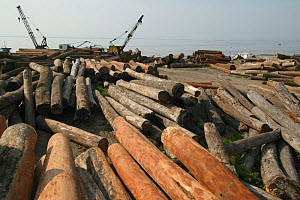 Illegally logged wood on the bank of Kinshasa, Democratic Republic of the Congo.  -  Cyril Ruoso