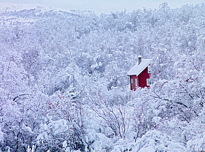 Red house surrounded by snow-covered trees in winter, Eastern Finnmark, Norway, November 2006. - Pal Hermansen