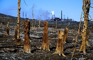 Dead, polluted Larch (Larix) forest, with power station behind, Norilsk, Russia.  -  Pal Hermansen
