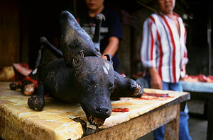 Dog meat for sale in Tomohon market, Celebes, Indonesia. - Cyril Ruoso