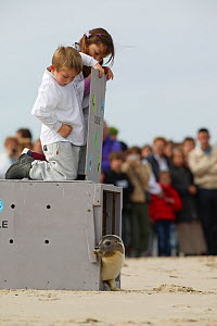 Children releasing Harbour seal (Phoca vitulina), whilst watched by spectators, on the shore of Bay of Somme, France, 3rd October 2004. - Cyril Ruoso