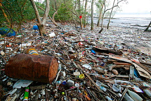 Pollution washed up in mangroves, Sungei Buloh Natural Park,  Singapore. Non-ex - Cyril Ruoso