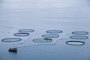 Fish farm off the coast of Streymoy, Faroe Islands, August 2003.  -  Cyril Ruoso