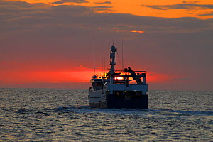Fishing vessel 'Ocean Harvest' heading for home as the sun sets over the North Sea, UK, August 2014. Property released.  All non-editorial uses must be cleared individually.  -  Philip  Stephen