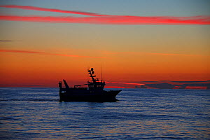 Fishing vessel 'Ocean Harvest' at dawn on a calm August morning, North Sea, UK. Property released.  All non-editorial uses must be cleared individually. - Philip  Stephen