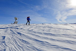 Cross country skier, Crater Lake National Park, Merriam Point, Oregon, USA. January 2015. Model released.  -  Kirkendall-Spring