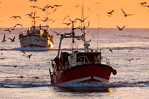 Fishing vessel coming in to Guilvinec Port at sunset, Finistere, Brittany, France. December. All non-editorial uses must be cleared individually. - Christophe Courteau