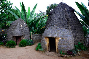Huts in Dorze village, Guge mountains, Lake Chamo, Dorze huts resemble larger-than-life-elephants. Ethiopia, November 2014  -  Enrique Lopez-Tapia