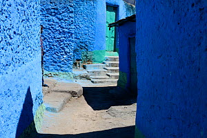 Narrow colourful streets of Harar, an important holy city in the Islamic faith, UNESCO World Heritage Site. Ethiopia, November 2014  -  Enrique Lopez-Tapia