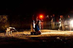 Tourists watching man feeding Hyaenas (Crocuta crocuta) at night in Harar City, this has been a tradition for several centuries, and has now become a show for tourists. Ethiopia, November 2014  -  Enrique Lopez-Tapia
