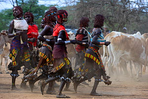 Women dancing at the Jumping of the bulls Hamer ceremony. This Hamer ceremony is a a right of passage into manhood for Hamer boys. During the ceremony young female relatives of the boys beg to be whip...  -  Enrique Lopez-Tapia
