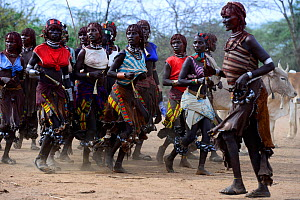 Women dancing at the Jumping of the bulls Hamer ceremony. This Hamer ceremony, it's a right of passage into manhood for Hamer boys. During the ceremony young female relatives of the boys beg to be whi...  -  Enrique Lopez-Tapia
