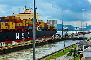 Container ship passing through the Panama Canal, Panama City, Panama, Central America. All non-editorial uses must be cleared individually.  -  Juan  Carlos Munoz