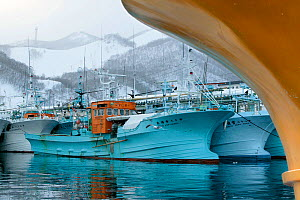 Trawlers in the port of Rausu in front of snowy mountains,  Shiretoko Peninsula, Hokkaido, Japan. All non-editorial uses must be cleared individually. - Klein & Hubert