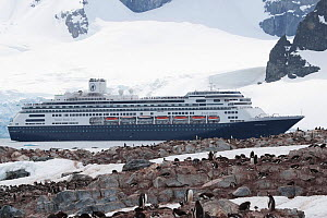 'MS Amsterdam' entering the western approach to the Errera Channel, Cuverville Island, Antarctic Peninsula, December 2008. All non-editorial uses must be cleared individually. - Rick Price