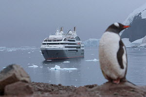 Gentoo penguin (Pygoscelis papua ellsworthii) with passenger ship 'Le Boreal' at anchor in the background, Neko Harbour, Andvord Bay, Antarctic Peninsula, February 2011.  All non-editorial uses must b...  -  Rick Price