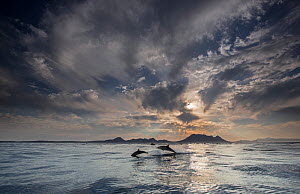 Long-beaked common dolphin (Delphinus capensis) school off the coast of False Bay, with dramatic sky, South Africa, May.  -  Chris & Monique Fallows