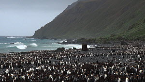 King penguin (Aptenodytes patagonicus) colony with the remains of penguin digesters used for the extraction of blubber oil in the background, Lusitania Bay, Macquarie Island, Sub-Antarctic Australia.  -  Fred  Olivier