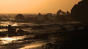 Hurd Point silhouetted at sunset, with Royal penguins (Eudyptes schlegeli) in the foreground, Macquarie Island, Australian Antarctica. - Fred  Olivier