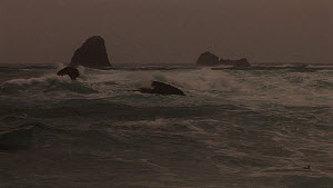 Large waves breaking on the shore, Macquarie Island, Australian Antarctica. - Fred  Olivier