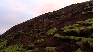 Wide shot of landscape erosion caused by European rabbits (Oryctolagus cuniculus), Macquarie Island, Australian Antarctica. - Fred  Olivier
