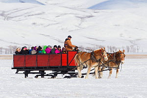 Horse and cart with tourists looking for elk, National Elk Refuge, Wyoming, USA. February 2014.  -  Peter Cairns