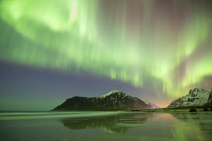 RF- Northern lights (Aurora borealis) over Skagsanden beach, Flakstadoya, Lofoten, Norway. March 2015. (This image may be licensed either as rights managed or royalty free.) - Peter Cairns