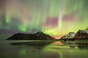 Northern lights (Aurora borealis) over Skagsanden beach, Flakstadoya, Lofoten, Norway. March 2015. - Peter Cairns