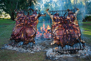 Roasted cow in cages, with leather, known as Asado Con Cuero, La Pampa, Argentina, March 2005. - Gabriel Rojo