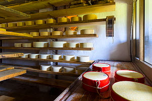 Cheese maturing on shelves in traditional dairy, Triglav National Park, Slovenia, October 2014.  -  Juan  Carlos Munoz