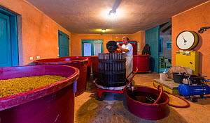 Man making wine in Branco Cotar Winery, Green Karst, Slovenia, October 2014. - Juan  Carlos Munoz