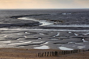 Low tide on the Wash, Snettisham, Norfolk, England, UK, February.  -  Ernie  Janes
