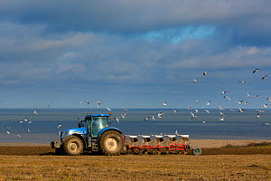 Tractor ploughing fields in spring near Salthouse with Sherringham Shoal  wind farm in the background,  Norfolk, England, UK, March 2015.  -  Ernie  Janes