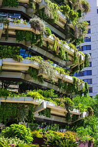 Vertical garden on the walls of a tower block, Barcelona. Catalonia. Spain, June 2013.  -  Juan Manuel Borrero
