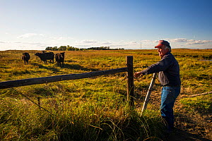 Lynn Ballagh closing gate on his cattle ranch, Sandhills of Nebraska, Garfield County, Nebraska, USA. - Cheryl-Samantha  Owen