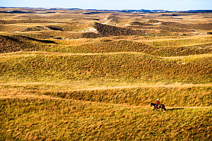 Aaron Price riding his horse 'Beau' over his Ranch, Gracie Creek, Sandhills, Nebraska. Garfield County, Nebraska, USA. October 2014.  -  Cheryl-Samantha  Owen