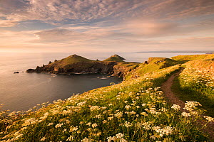 The Rumps, Pentire Head, late evening light with the Devon Coastal Path, Polzeath, Cornwall, UK. June 2015.  -  Ross Hoddinott