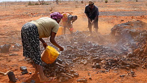 Group of men and women unearthing bits of charcoal from a charcoal pile, Kenya, 2014. - Steve O. Taylor (GHF)