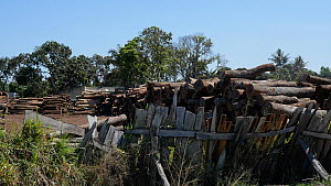 Stacks of various felled hardwoods in a timberyard, awaiting export to China, Mozambique, 2014. - Steve O. Taylor (GHF)