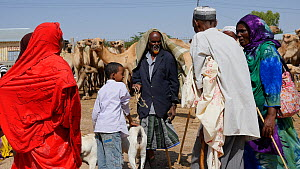 Group of people talking at Hargeisa Livestock Market, with domestic camels and goats, Somaliland, 2014. - Steve O. Taylor (GHF)