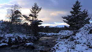 Allt Ruadh flowing above Glenfeshie at sunset, Cairngorms National Park, Scotland, UK, January 2015.  -  SCOTLAND: The Big Picture