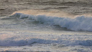 Waves breaking just off shore, Harris, Outer Hebrides, Scotland, UK, November.  -  SCOTLAND: The Big Picture