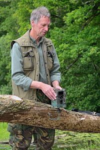 Tom Buckley setting up an infra red trailcam on a Willow tree (Salix sp.) felled by Eurasian beavers (Castor fiber) on the banks of the River Otter, Devon, England, UK, May. Model released.  -  Nick Upton