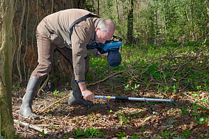 Keith Cohen using a radiotracker to locate a radio-collared Edible / Fat Dormouse (Glis glis) hibernating in its underground burrow in woodland where this European species has become naturalised, Buck...  -  Nick Upton