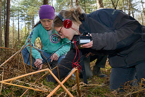 Jia Ming Lim and Dani Rozycka using a radiotracking cable to pinpoint a radio-collared Edible / Fat Dormouse (Glis glis) hibernating in its underground burrow in woodland where this European species h...  -  Nick Upton