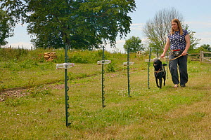 Emily Howard-Williams with Labrador Tui, sniffing grain feeding bottles collected from a field site where Harvest mice (Micromys minutus) have been released, to identify which ones have been visited,...  -  Nick Upton