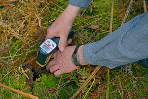 Infra red digital thermometer used to measure the temperature of an Edible / Fat Dormouse (Glis glis) hibernation burrow in woodland where this European species has become naturalised, Buckinghamshire...  -  Nick Upton