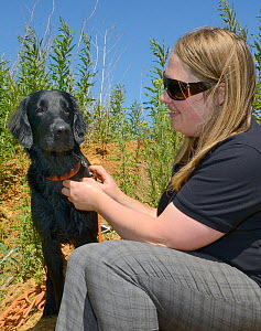 Emily Howard-Williams with Labrador Tui, who has been trained to sniff out feeding stations visited by Harvest mice (Micromys minutus), Moulton, Northampton, UK, June.  Model released.  -  Nick Upton