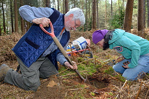Roger Trout and Jia Ming Lim excavating the hibernation burrow of  an Edible / Fat Dormouse (Glis glis) in woodland where this European species has become naturalised, Buckinghamshire, UK, April, Mode...  -  Nick Upton